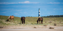 Cape Lookout And Shackleford B...