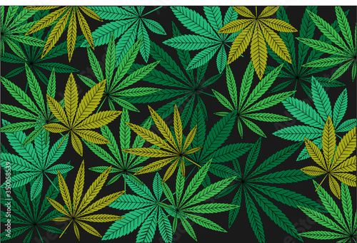 Photo Background of green and yellow leaves of Cannabis Sativa and Indica