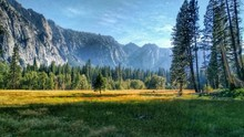 Trees On Grassy Landscape Against Mountains At Yosemite National Park