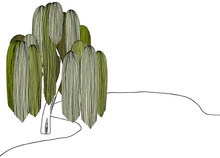 Landscape Line Art Ink Drawing, Weeping Willow Tree Beside Pond