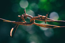 Rusty Barbed Wire