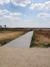 Boardwalk Over Grassy Area