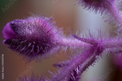 Fototapety, obrazy: Close-up View Of Flower Bud