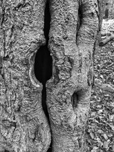Close-up Of Knothole In Tree