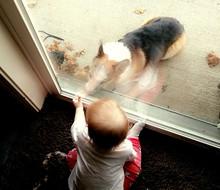 Dog And Boy Looking Through Glass Door