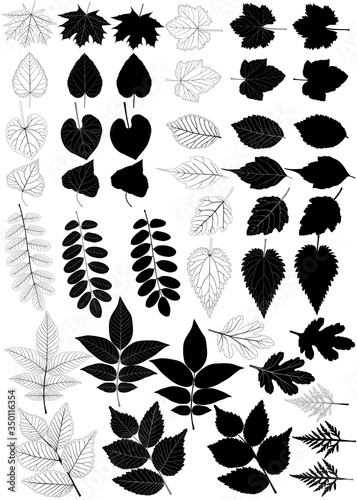 Collection of different species of foliage in silhouette and black-white image: Canvas Print