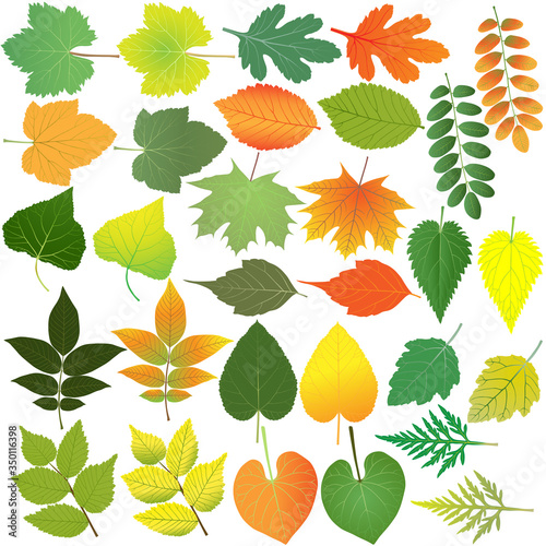 Collection of different species of foliage in colour image: maple, poplar, walnu Canvas Print