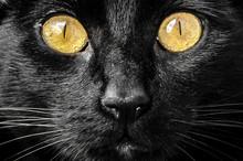 Detail Shot Of A Cat