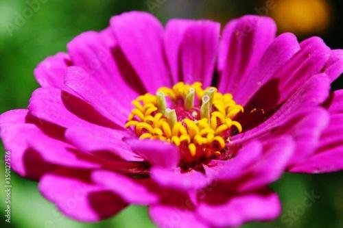 canvas print motiv - kerry handelong/EyeEm : Close-up Of Pink Flower