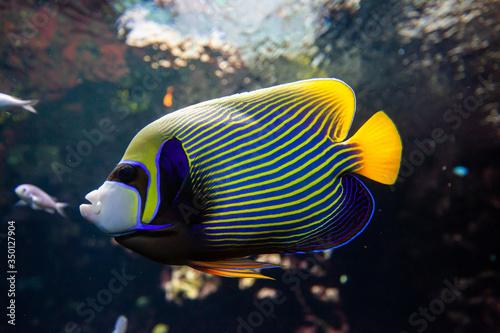 Fototapety, obrazy: pesce