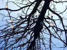 Low Angle View Of Light Bulbs On Bare Tree Against Sky
