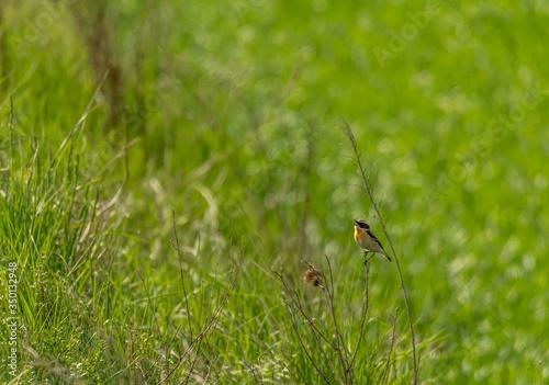 Ptak wiosna zboże - 350132948