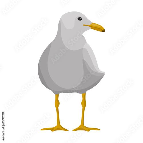 Valokuva Bird gull vector icon
