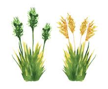 Grass Set. Cane Reed Grass Wit...