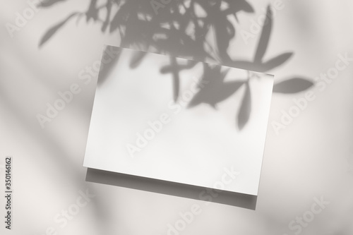 Fototapeta Summer stationery still life scene. Close-up of blank paper, greeting card mock-up. Trendy olive tree branches long shadows. White table background in sunlight. Flat lay, top view.Empty copyspace. obraz