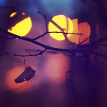 Single Dried Leaf Hanging On B...