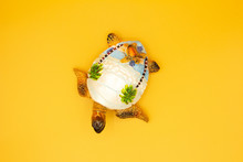 Souvenir Yellow Turtle On A Ye...