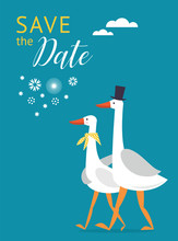 Save The Date Card Design. Couple Of Cute White Gooses.