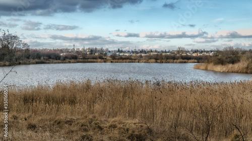 Fototapeta Jezioro, trzciny, widok miasta w tle obraz