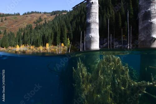 Photo Underwater forest altitude lake
