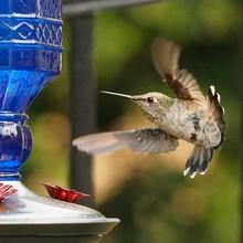 Close-up Of Hummingbird Flying Towards Bird Feeder
