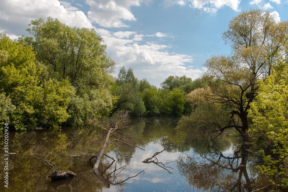 Fototapeta jedna z większych rzek Polski, rzeka Bug,  wspaniała dzika przyroda, błękitne niebo z malowniczymi obłokami