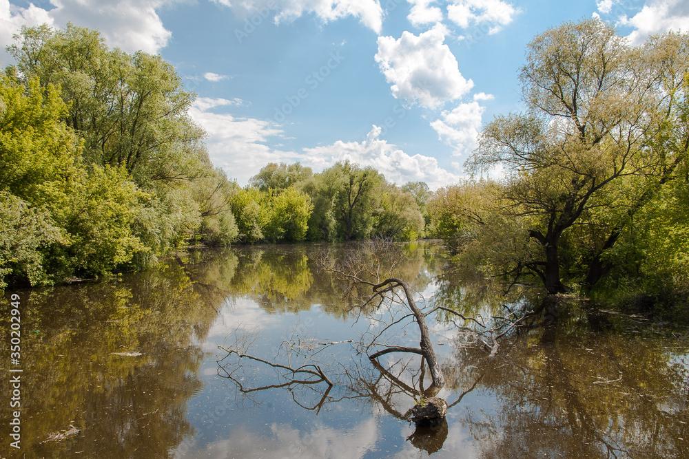 Fototapeta dzika Polska rzeka Bug, granica Polski, słoneczny letni dzień, błękitne niebo pełne chmur