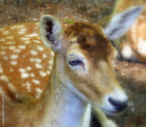 High Angle View Of Axis Deer Canvas Print
