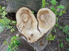 Baumstumpf In Herzform