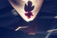 Upside Down Image Of Person Holding Flower On Hand