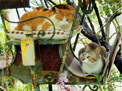 Close-up Of Cats Sitting In Rickshaw Tapéta, Fotótapéta