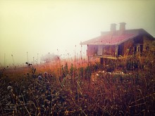 Plants And House On Field In Foggy Weather