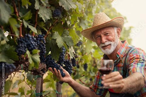 Fotografie, Obraz Winemaker in vineyard with glass of white wine