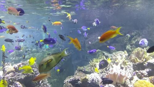 Fotografia Fish Swimming In Sea