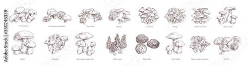 Stampa su Tela Collection of different realistic edible mushrooms in monochrome style
