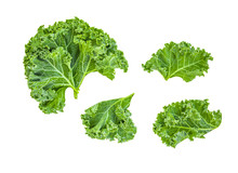 Creative Layout Made Of Kale Leaves. Flat Lay. Raw Kale Salad Isolated On White Background. Food Concept..