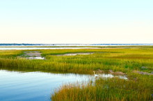 Landscape With Vibrant Yellow Green Salt Marsh Grass And Intertidal Waters Off Of Moriches Bay On The South Shore Of Long Island.  Westhampton Beach, NY.   Copy Space.