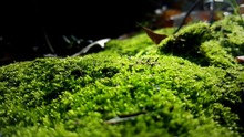 Close-up Of Moss Covered Rocks