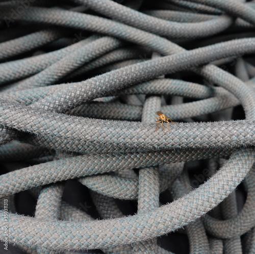 Photo zancudo sobre cuerda de escalada. foto: Antonio Leon