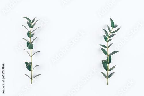 Fototapeta Green eucalyptus branches on a white background. Flat lay, top view. obraz