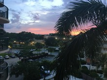 Sunset View From A Resort Condominium In Florida.  A Palm Tree Makes A Colorful Scenic Photo.