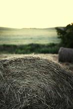 Cropped Shot Of Straw Bale In Field