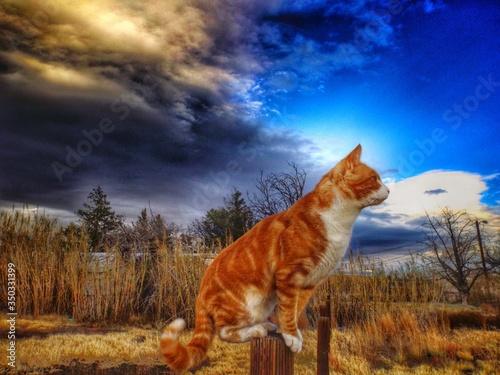 Fotografia Cat Sitting On Wooden Post At Field