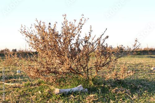 Cuadros en Lienzo Arbusto y hueso