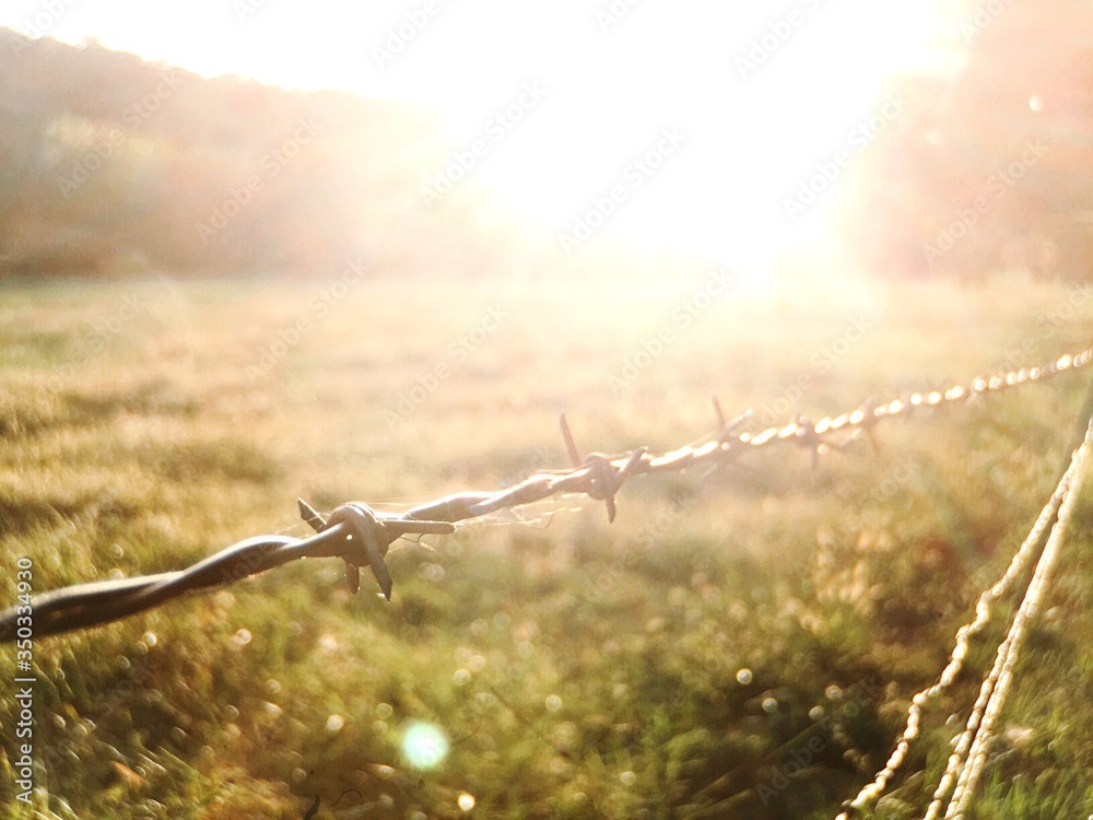 Fototapeta Close-up Of Barbed Wire Fence On Grassy Field