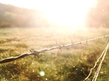 Close-up Of Barbed Wire Fence ...