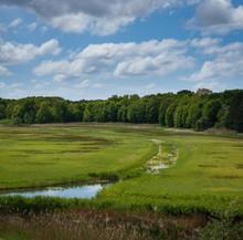 Little Stream Running Through The Green Reed Marshlands Of The Kennermerduinen