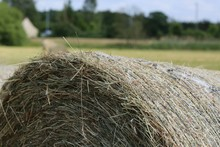 Close-up Of Cropped Hay Bale On Landscape
