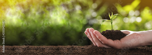 Fototapeta Planting tree. Woman holding young green seedling in soil, banner design with space for text obraz