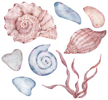 Watercolor Set Of Seashells, Pebbles And Seaweed Isolated On The White Background For Design. Hand-drawn Illustration.